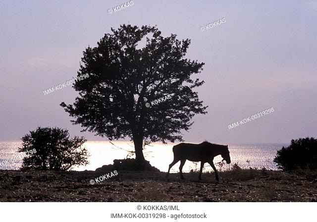 Landscape, tree, horse, Samothrace, N  E  Aegean, Greece