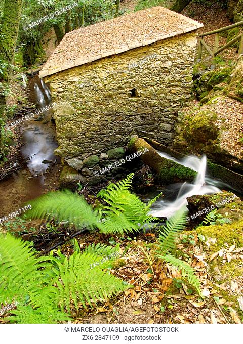 Ferns and water drainage through wooden channel towards stone mill. Mill route at Merin River (branch of Ulla river). San Pedro de Vilanova Parish