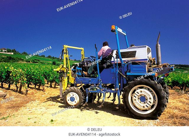 grape harvester,Burgundy,France