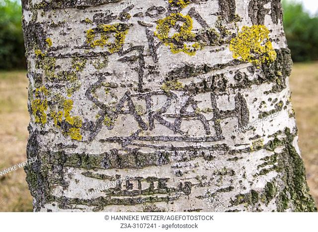 Names Carved On Tree Stock Photos And Images Age Fotostock