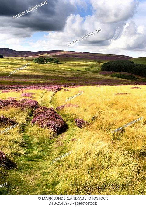 The St Cuthberts Way over Heather Moorland near Wooler Northumberland National Park England