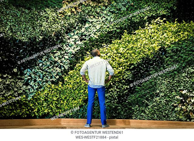 Young man standing in front of green plant wall, rear view