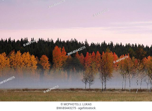 autumn scenery with ground fog, Sweden, Vaestergoetland, Upphaerad