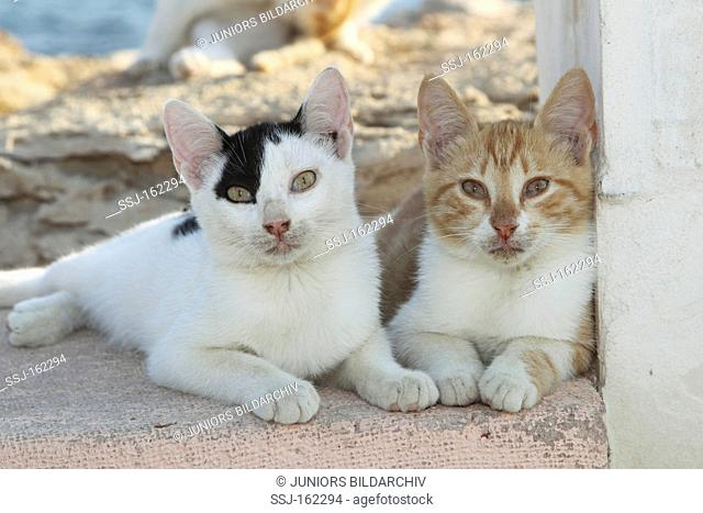 two young domestic cats - lying on wall