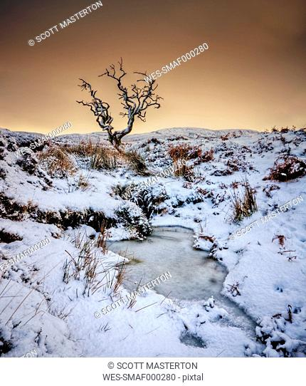 UK, Scotland, Isle of Skye, tree in winter