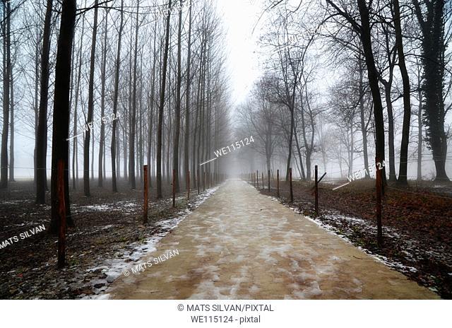 Foggy allee in winter