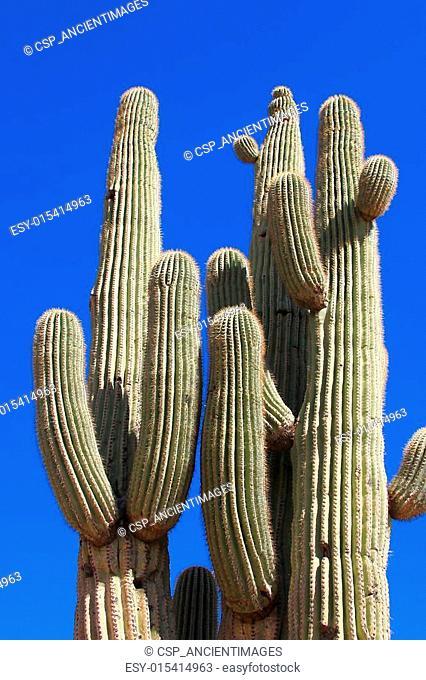 Saguaro Group
