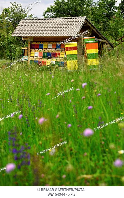 Colorful traditionally painted apiary beehive house at Kralov Med in Selo near Bled Slovenia with field of Spring wildflowers