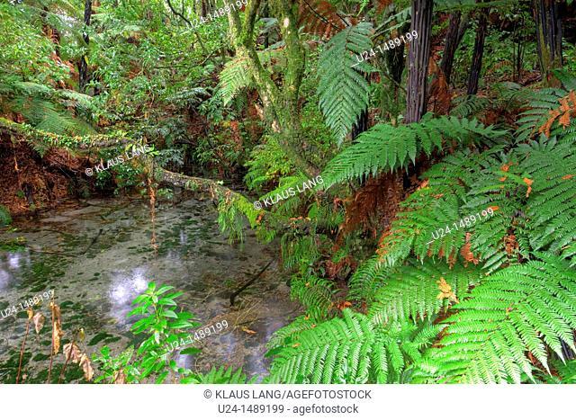 Hamurana Springs, Rotorua, North Island, New Zealand