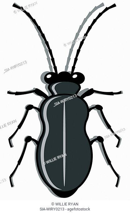 Grey bug against white background
