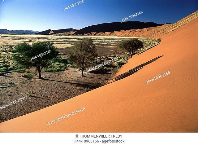 Africa, trees, dune, desert, plain, Namib, Namibia, sand, Sossusvlei, vegetation