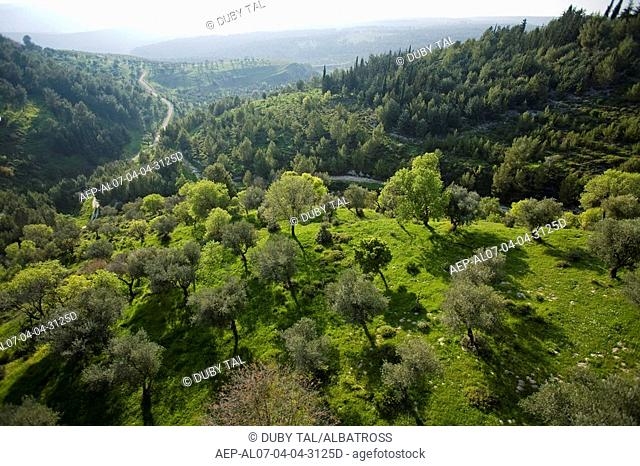 Aerial photograph of the Biriya forest in the Upper Galilee