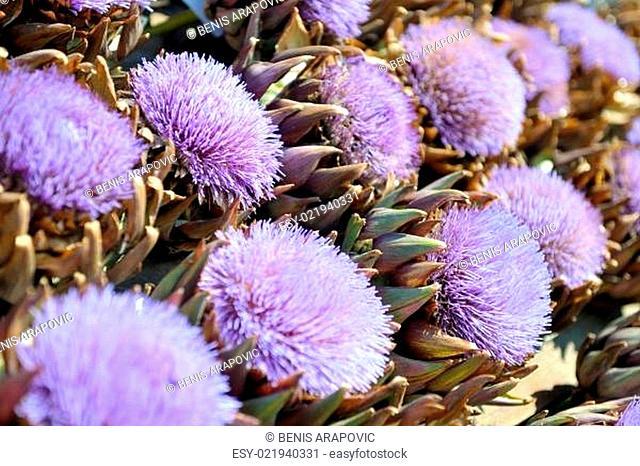 artichoke purple flower