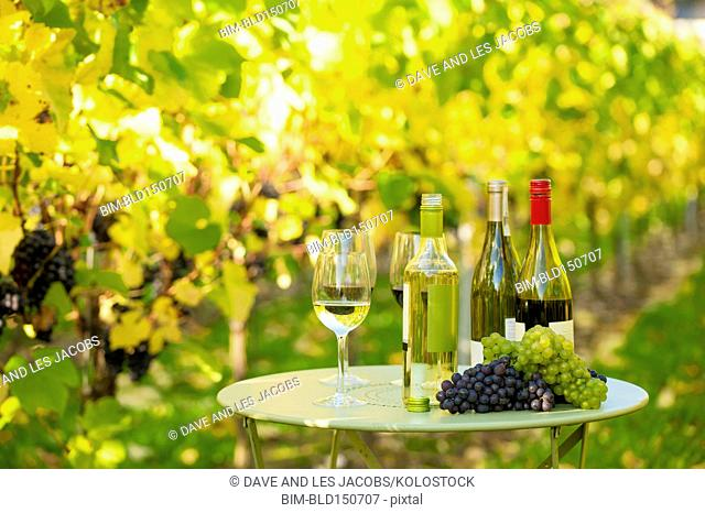Variety of wine for tasting on table in vineyard