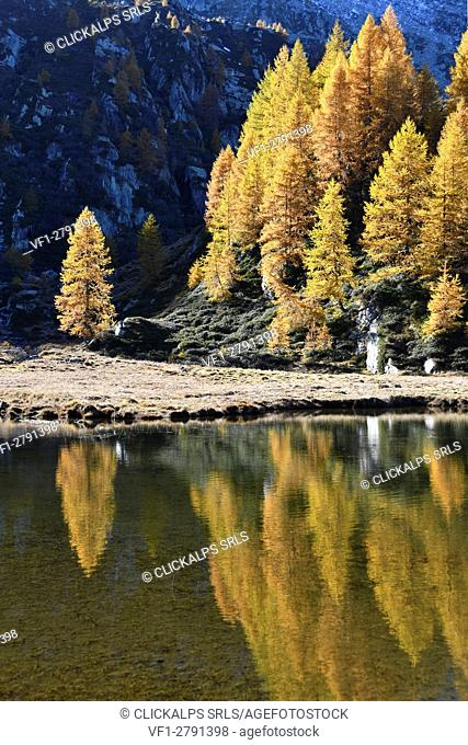 Mirrored autumn colors on the lake (Champas), Camporcher Valley, Aosta Valley, Italy