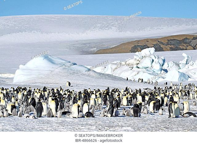 Emperor penguins (Aptenodytes forsteri), penguin colony at the nesting place in the ice, Antarctica