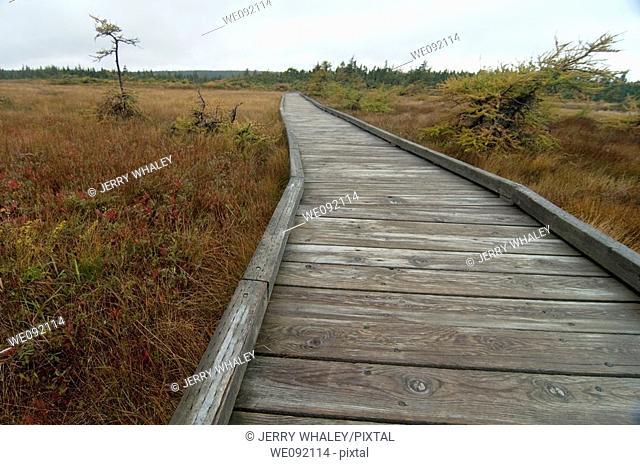 French Mountain Bog, Cape Breton Highlands Nat Park, Nova Scotia
