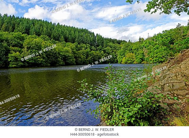 River, Ourthe, Lac de Nisramont, wood, Houffalize Belgium