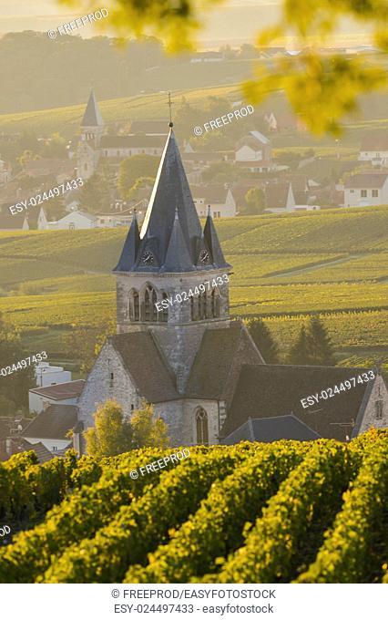 Champagne vineyards Villedomange in Marne department, Champagne-Ardennes, France, Europe