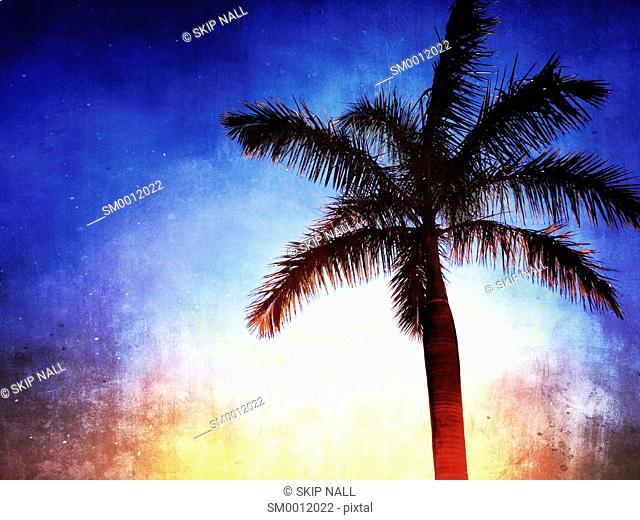 Florida palm tree against a sunny sky