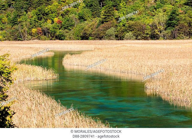 Asia, China, Sichuan province, UNESCO World Heritage Site, Jiuzhaigou National Park, river coming from the Reed lake