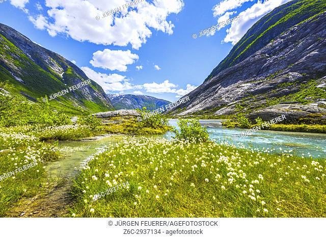 cotton grass at the Nigardsbreenvatnet, lake of the Nigardsbreen glacier, Norway, Scandinavia