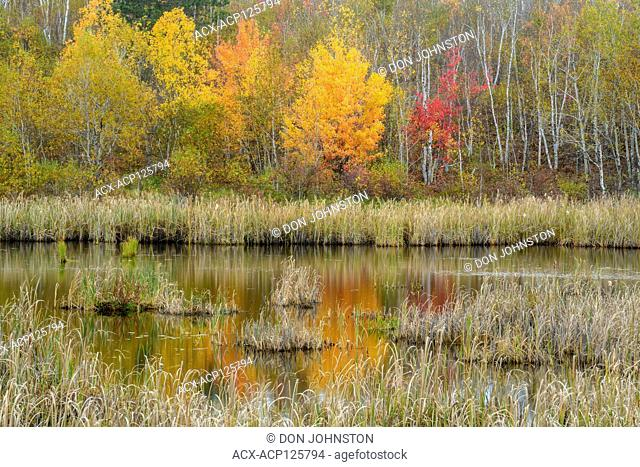 Autumn reflections in a pond, Greater Sudbury (Guilletteville), Ontario, Canada