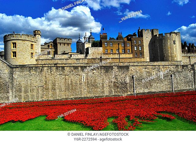 Tower of London in warm evening light surrounded by artificial poppies planted to commemorate the British and Commonwealth fallen of World War One on the one...