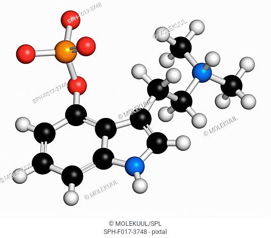 Psilocybin psychedelic mushroom molecule, computer illustration. Prodrug of psilocin. Atoms are represented as spheres with conventional colour coding: hydrogen...