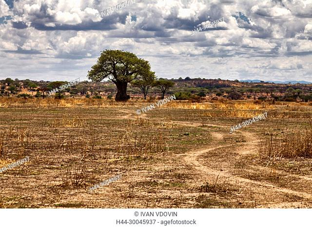 Lonely tree, Savanna landscape, Tanzania, East Africa