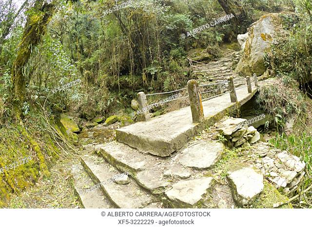 Mountain Footpath Bridge, Mountain Forest Footpath, Trek to Annapurna Base Camp, Annapurna Conservation Area, Himalaya, Nepal, Asia