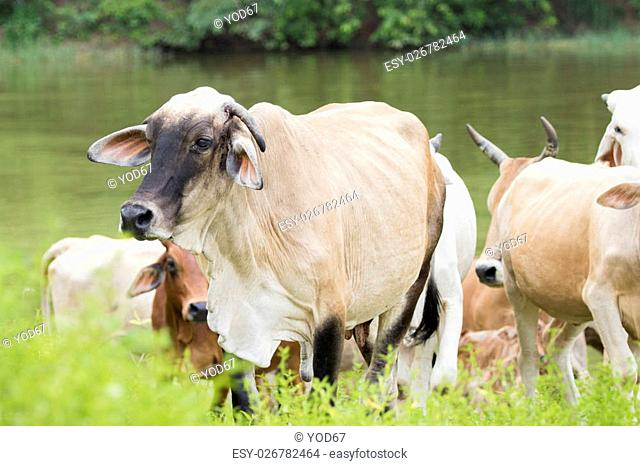 Image of cow on nature background
