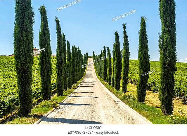 Umbria (Italy) - Road with cypresses in a farm near Assisi