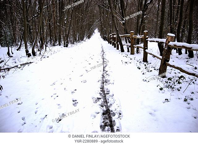 Bridleway through Ruislip Woods Nature Reserve in Winter snow, in Ruislip, Greater London, England