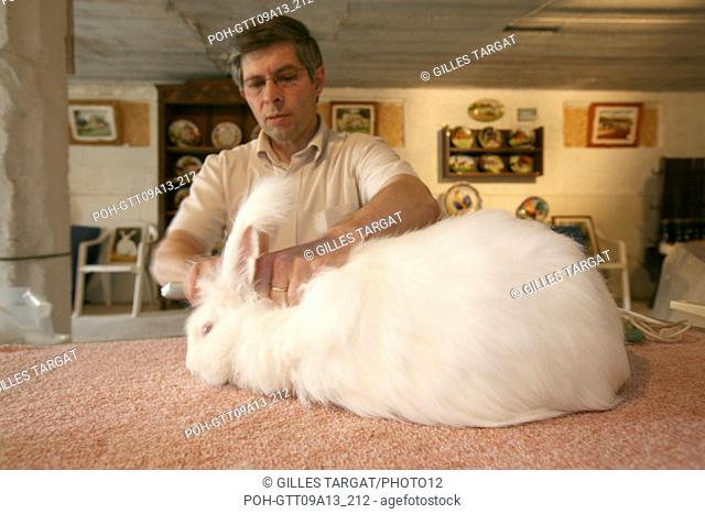 tourism, France, upper normandy, seine maritime, pays de caux, le catellier, breeding of angora rabbits, farm of chaud lapin m lepecqueur, wool