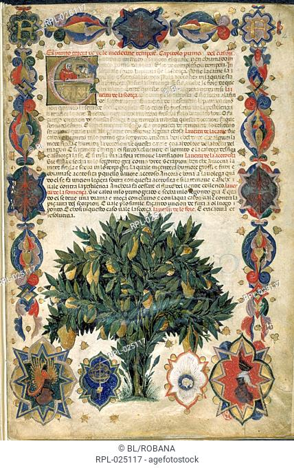 Text page with ornamental borders, Whole folio Text page with ornamental borders containing a fruit-bearing tree and the arms of Carrara and at the top
