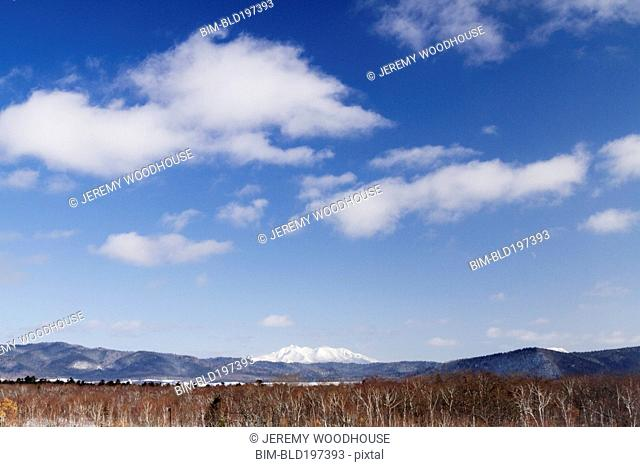 Blue skies over trees in front of snow covered Mount Shari