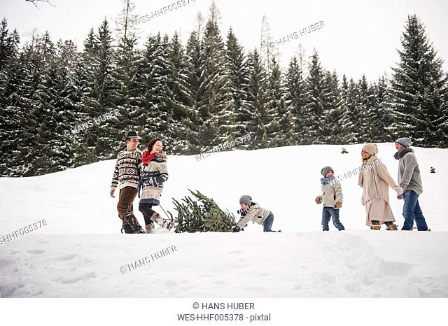 Austria, Altenmarkt-Zauchensee, two couples and two children transporting Christmas tree through winter forest