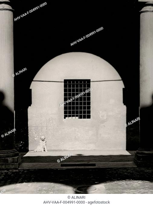 A Dog's Life: a dog under a porch, shot 1950-1955 by Villani, Studio,Ferri, Luciano