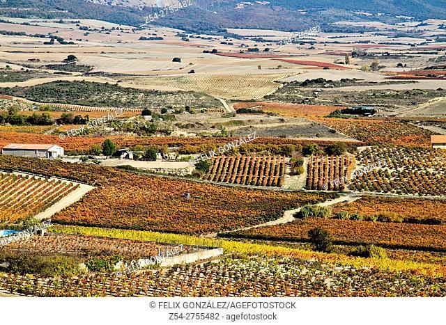 Vineyard panoramic views of La Guardia, La Rioja, Spain