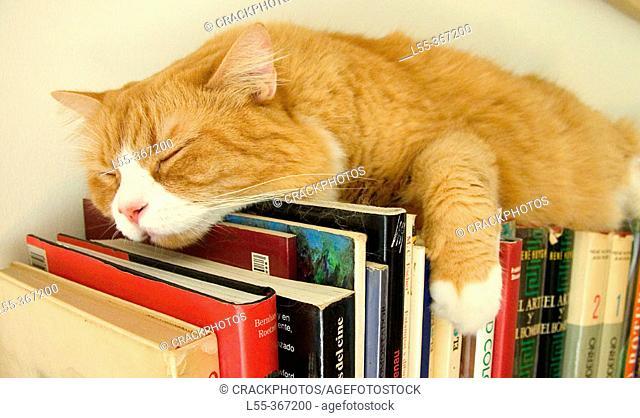 Cat sleeping on books