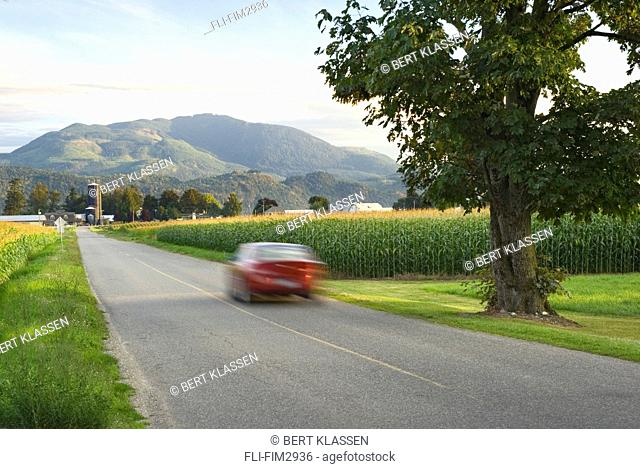 Car Driving Down Rural Road, Abbotsford, British Columbia