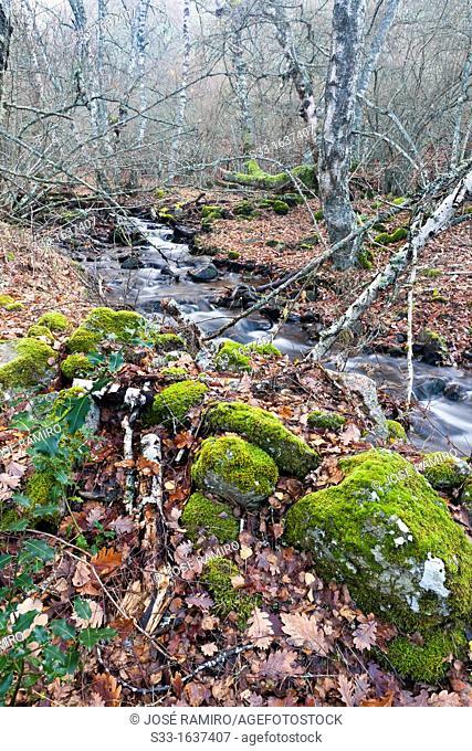 The Dehesa stream in the Sierra Norte  Somosierra  Madrid  Spain