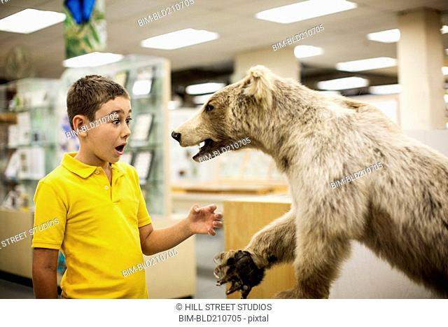 Caucasian boy surprised by stuffed bear in museum
