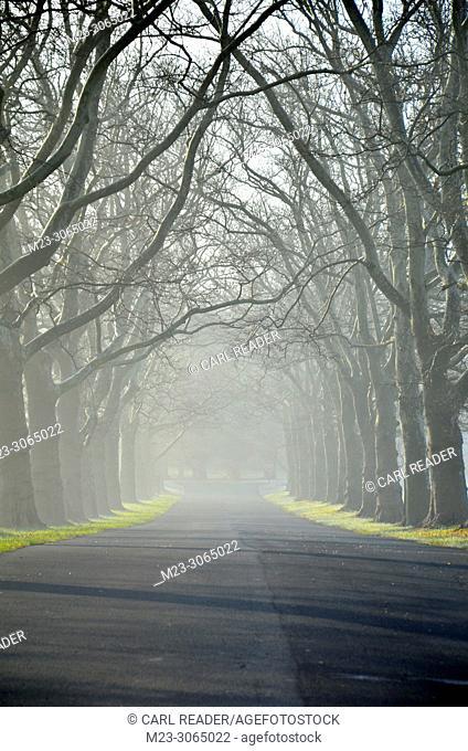 A tree-tunnel with mist, Pennsylvania, USA