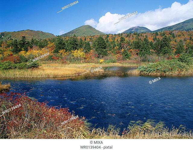 Water Lily Pond, Towada, Aomori, Japan