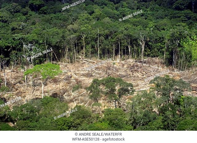 Patch of destroyed rain forest, Amazonas, Brazil