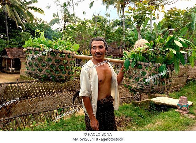 asia, indonesia, bali island, ubud, farmer