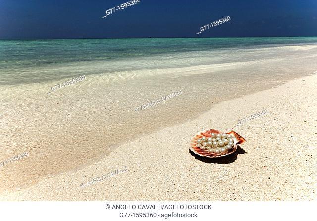 Maldives Islands  Ari Atoll