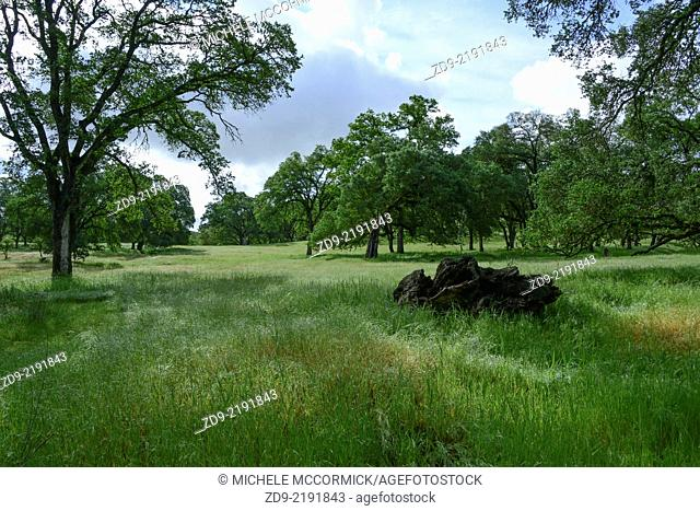 Rolling oak woodlands of Northern California